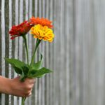 Farvede blomster rakt gennem gråt rækværk